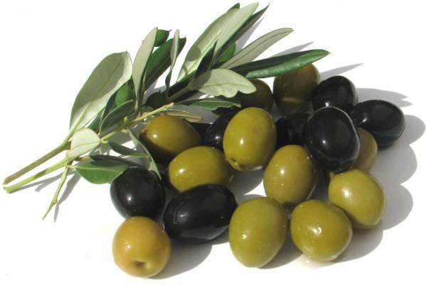 el-arbol-del-olivo-aceitunas