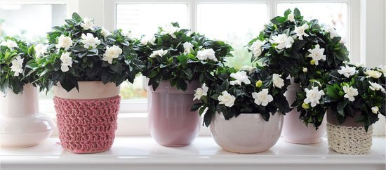 gardenia-interior