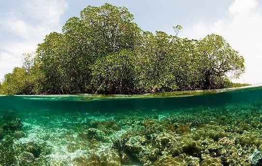 manglares.jpg