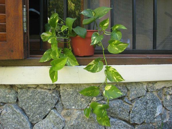 Plantas de interior cuidados - Plantas de interior cuidados ...