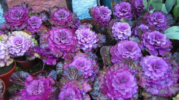 Las plantas de exterior que aguantan el fr o invierno for Plantas aromaticas exterior todo el ano
