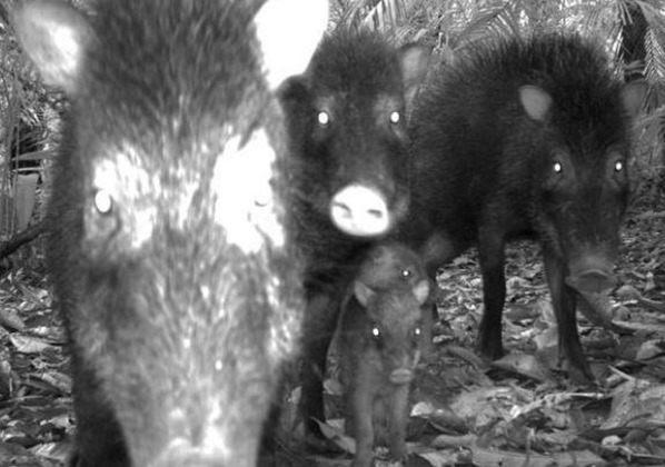 animales-en-peligro-fotos_thumb.jpg
