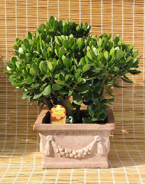 Plantas suculentas - Tendenzias.com