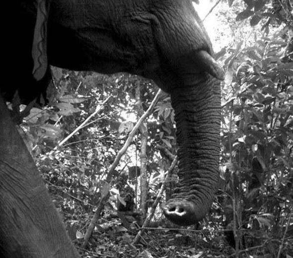 foto-elefante_thumb.jpg