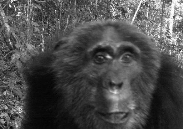 fotografia-animales-en-peligro2_thumb.jpg