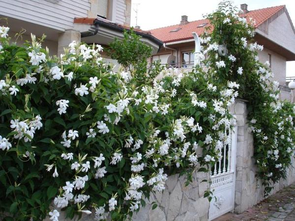 Las plantas de exterior que aguantan el fr o invierno for Plantas de terraza resistentes