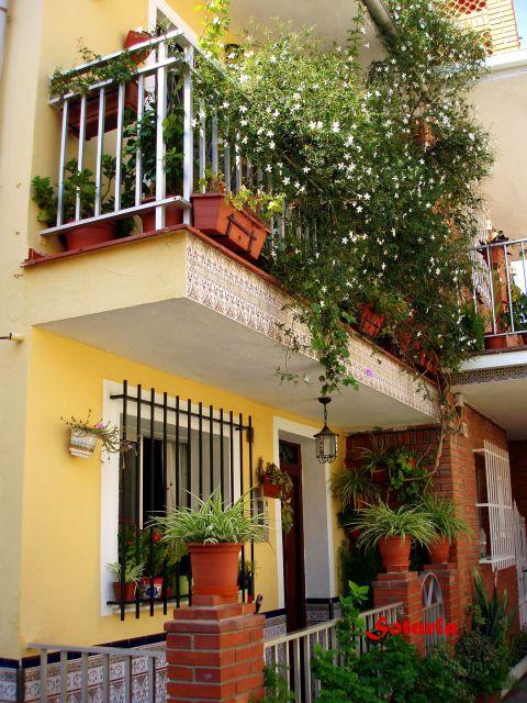 jazmin en balcon