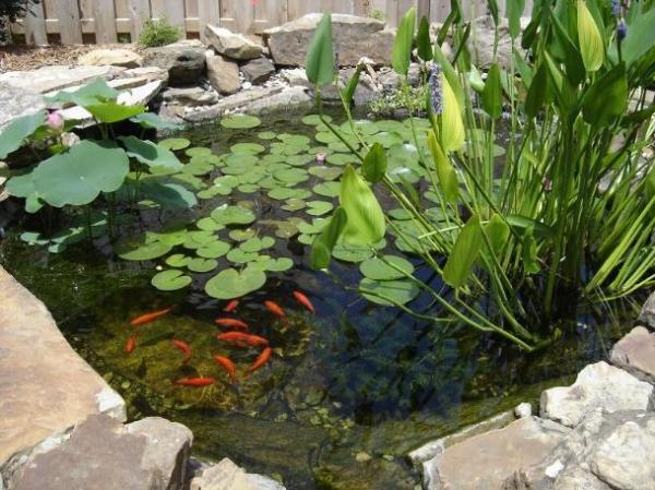 plantas acuaticas estanque