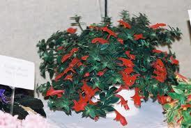 Plantas de interior con flor Columnea