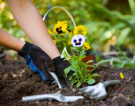 consejos jardinería
