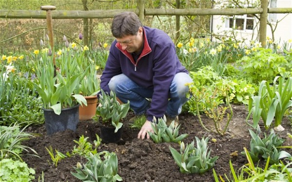 plantar jardin