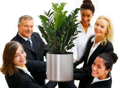 plantas en la oficina-productividad