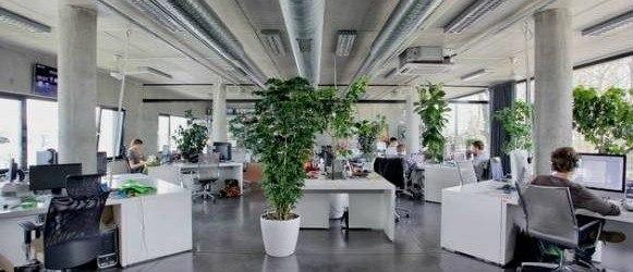 Las plantas mejoran la productividad y bienestar en el trabajo