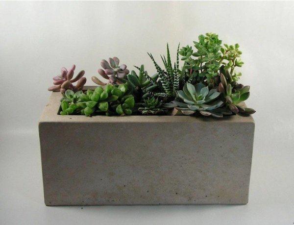Consejos sobre macetas for Fotos de plantas en macetas