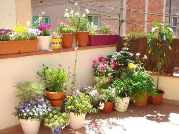 Consejos sobre macetas for Plantas para decorar jardines