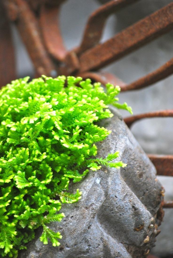 planta interior sin luz