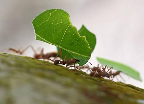 remedios-naturales-para-combatir-las-hormigas-del-jardin_cj5gv