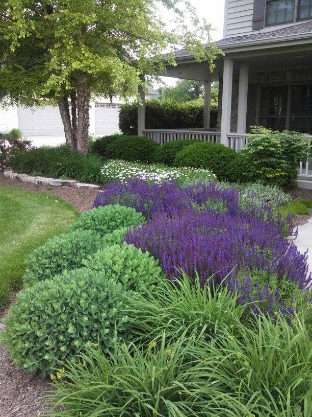 Arbustos de jard n con flores azules - Idea casa biancheria mestre ...