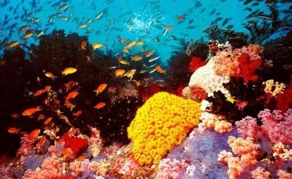 barrera-de-coral_thumb.jpg