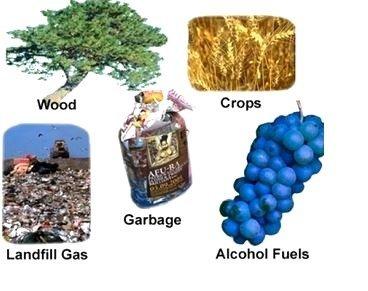 La Biomasa ayuda a reducir las emisiones de CO2