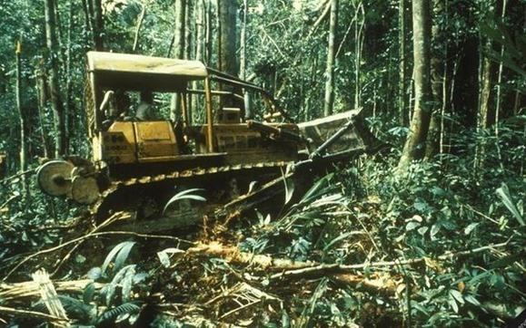 Pérdida de especies en el Amazonas