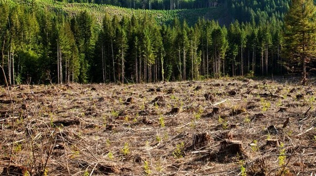 Prevenir la desforestación