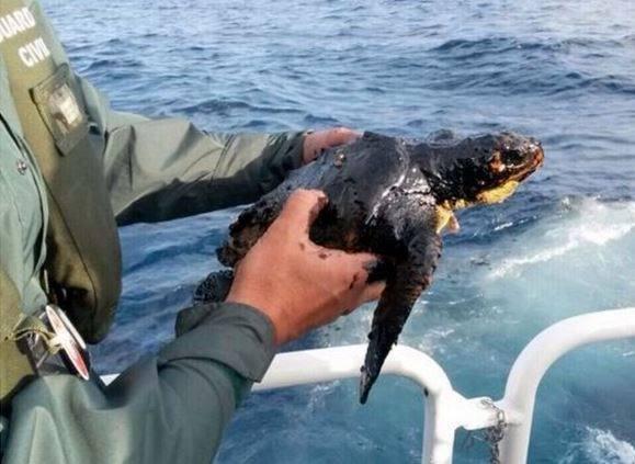 tortuga-rescatada.jpg