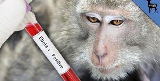 experimentacion-en-animales_thumb.jpg