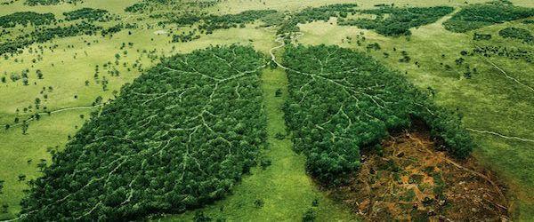Causas principales de la contaminación del suelo