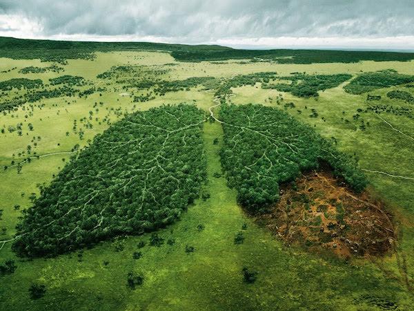 causas-principales-de-la-contaminacion-del-suelo-deforestacion