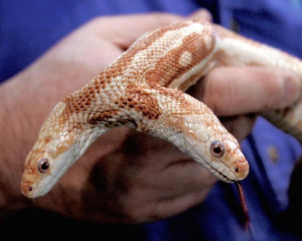 causas-principales-de-la-contaminacion-del-suelo-serpiente-de-dos-cabezas