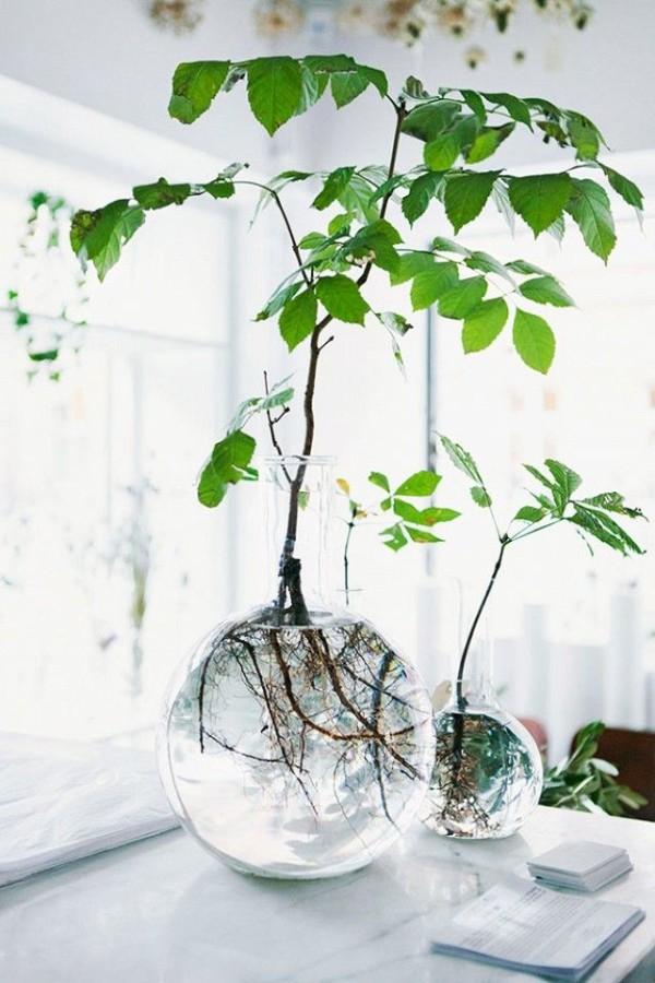 El potus poto una de las plantas de interior favoritas for Plantas en agua interior