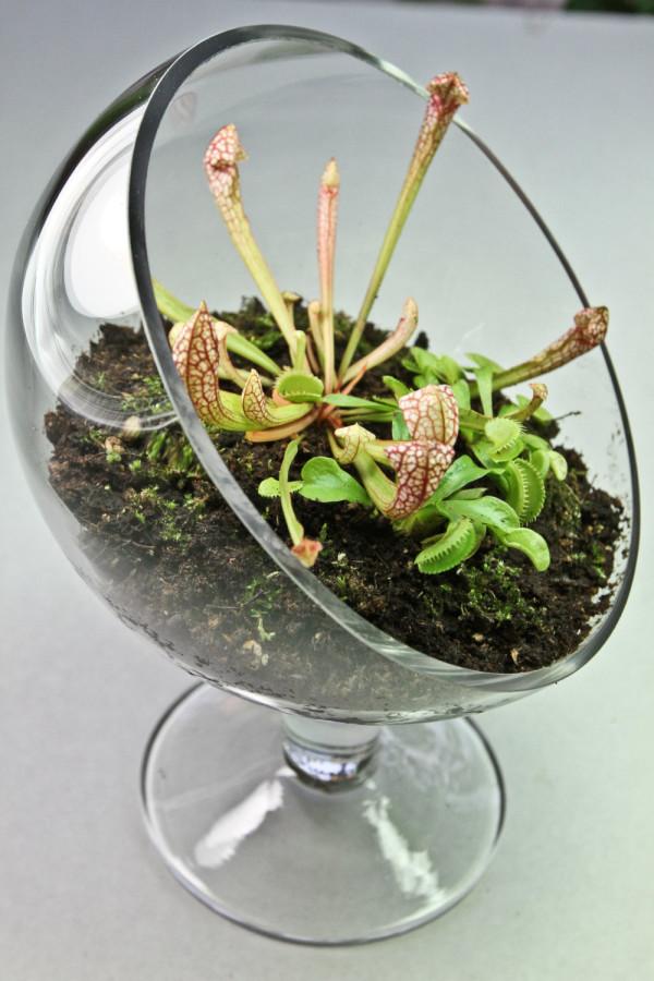 plantas-carnivoras-decoracion