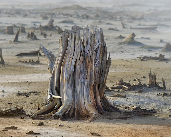 consecuencias-de-la-lluvia-acida-arboles-secos