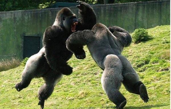 l animal más fuerte del mundo