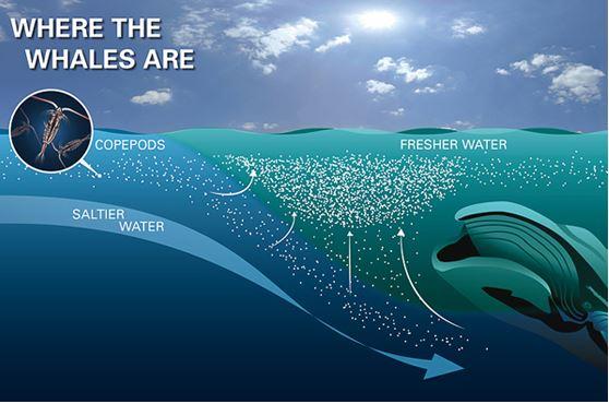 La importancia del Omega 3 para los océanos