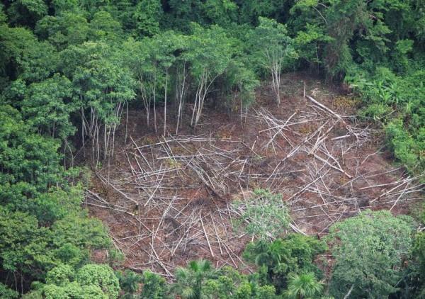 Perdida de especies en el Amazonas
