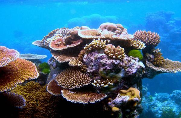 Protector solar tóxico para los arrecifes de coral