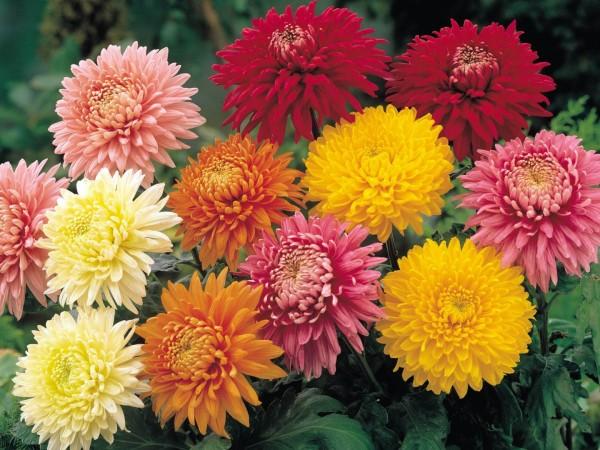 flores-todos-los-santos
