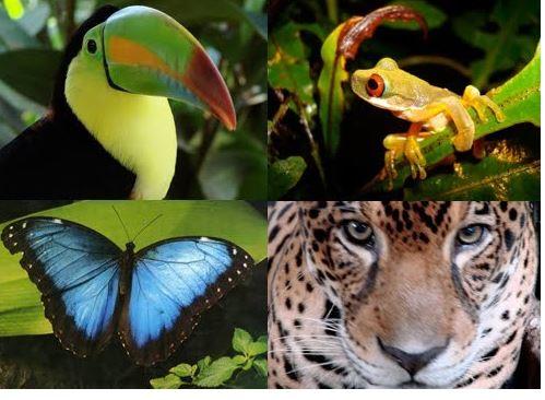 perdidda de especies amazonas
