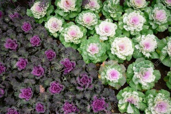 Plantas ornamentales para exteriores - Plantas para exterior ...