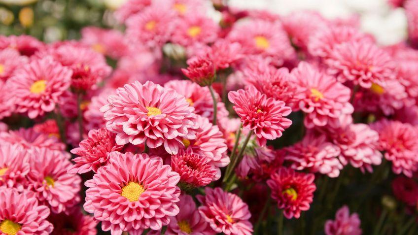 Las Plantas De Exterior Que Aguantan El Frio Invierno Tendenziascom - Plantas-de-exteriores-con-flores