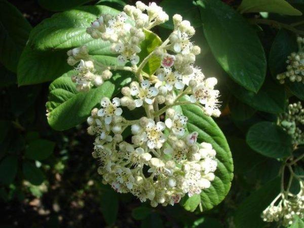 Plantas que aguantan mucho sol plantas que aguantan el - Plantas que aguanten el sol ...