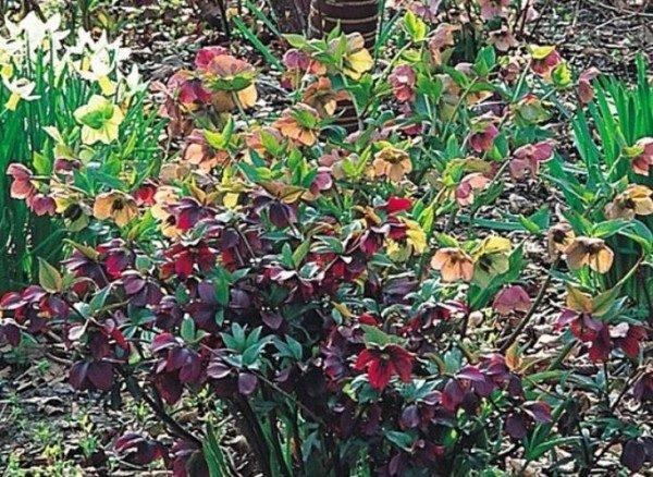 Las Plantas De Exterior Que Aguantan El Frío Invierno Tendenziascom