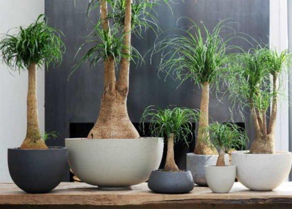 20 bonitas formas de decorar la casa con plantas de for Tipos de plantas para decorar interiores