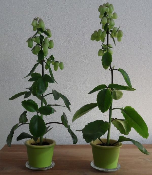 Plantas de interior para decorar la casa o la oficina - Plantas interior grandes ...
