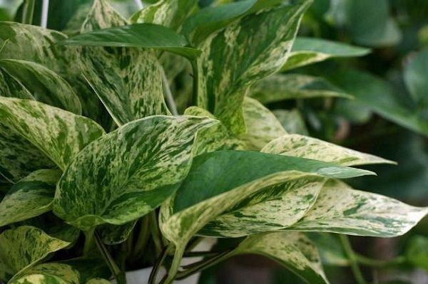 plantas-de-interior-sin-flor