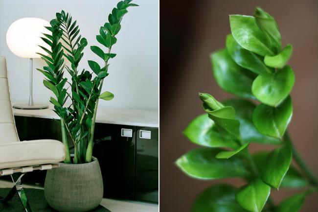 Plantas De Interior Para Decorar La Casa O La Oficina Tendenziascom - Plantas-interior-con-flor