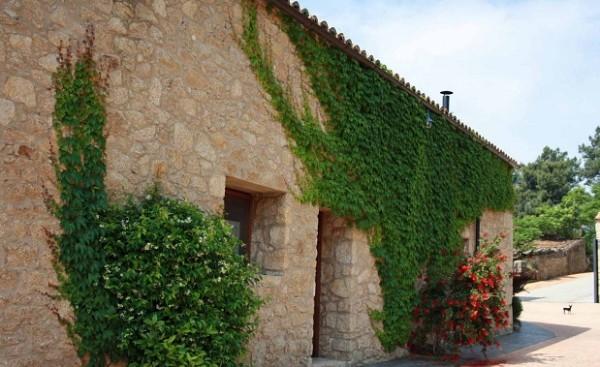 Plantas trepadoras caracter sticas generales - Tipos de revestimientos exteriores ...