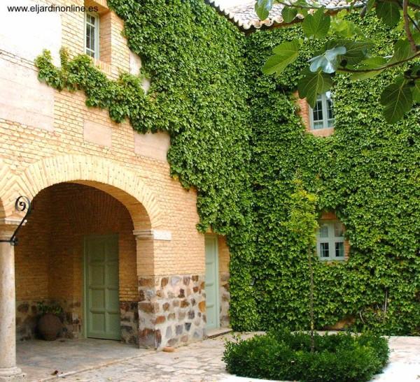 plantas-tre-padoras-caracteristicas-generales-paredes